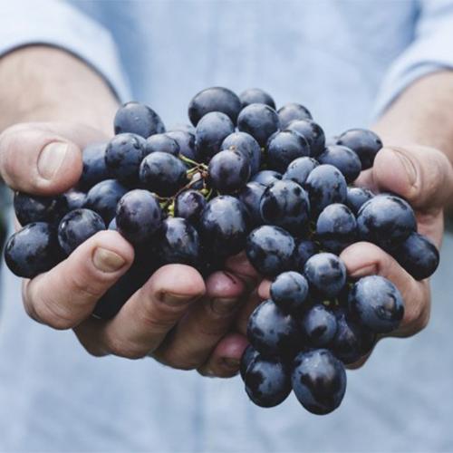 NEOQUIM - NEOCREM WINE