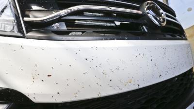 mosquitos coche